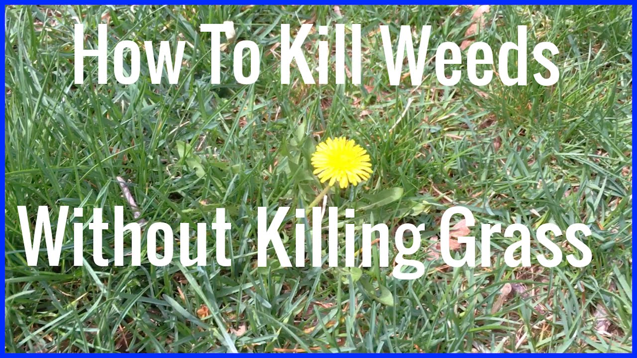 Wild marigold weed how to kill
